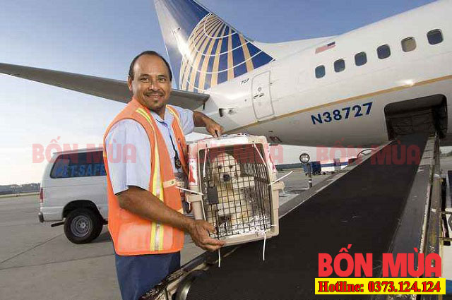 Hình thức vận chuyển chó mèo bằng máy bay cực nhanh chóng